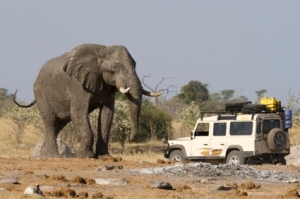pic-groups-africa-safaris-istock_000008212126xsmall